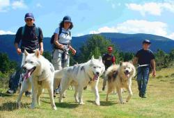 Walking with a husky dog pack at Praboure